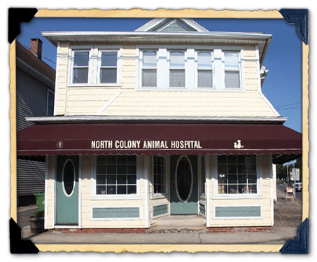 Our North Haven, CT Veterinary Hospital Location