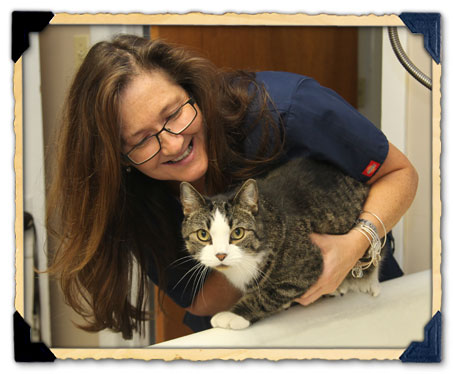 Client Services of North Haven Animal Hospital